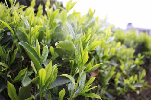 茶圈界奇葩称呼大总汇