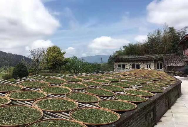 读懂武夷岩茶从制作武夷岩茶开始